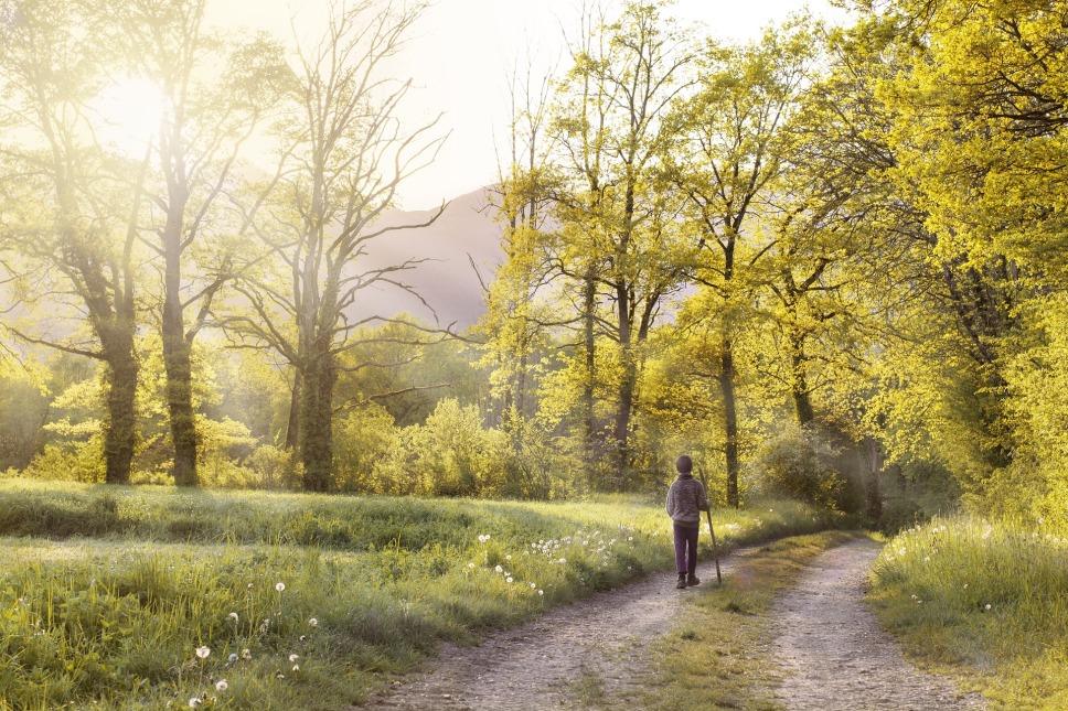 path-1577192_1920.jpg