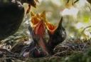 bird-3350136_640