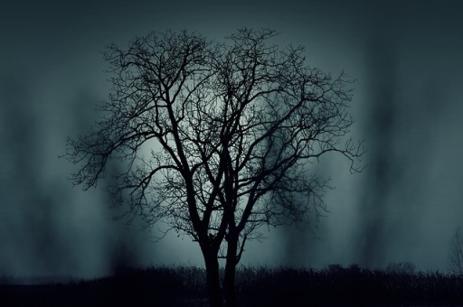 tree-407256_640.jpg